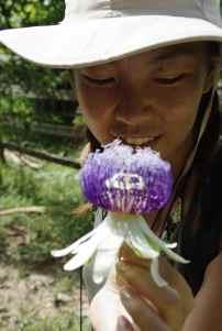 Blüte Passionsfrucht (vorne)